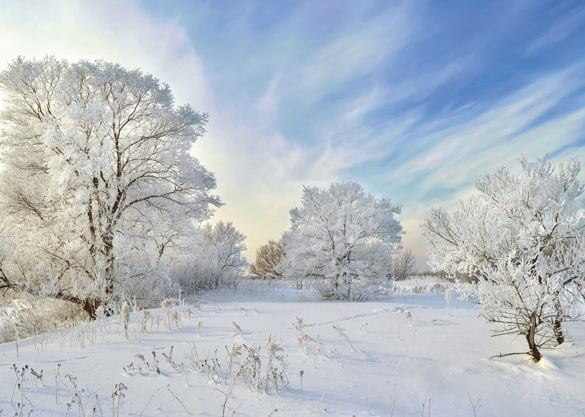 The Hoarfrost